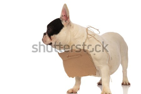 adorable french bulldog wearing empty sign looks to side Stock photo © feedough