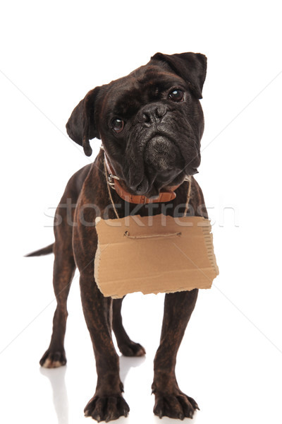 sad boxer with carton board around neck begging for food Stock photo © feedough