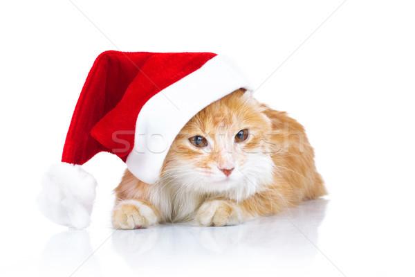orange cat wearing santa claus hat  Stock photo © feedough