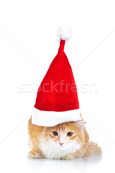 cute cat wearing a big santa claus hat  Stock photo © feedough