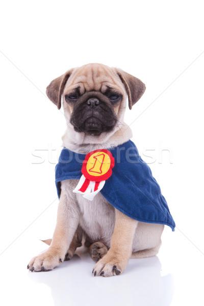 sad superhero pug sitting down after a bad day Stock photo © feedough