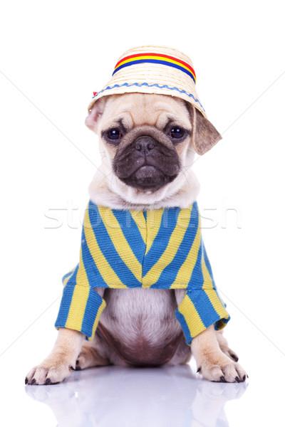 Foto d'archivio: Cute · cucciolo · cane · indossare · vestiti · tradizionale