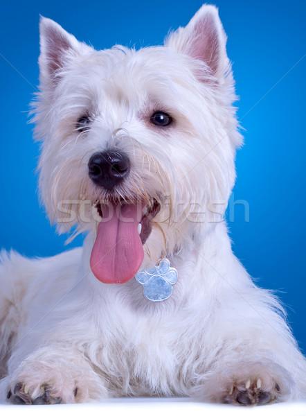 Zihálás közelkép kép áll kék háttér Stock fotó © feedough