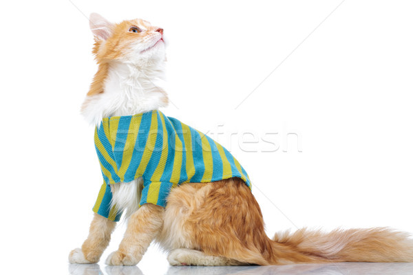 side view of a dressed cat looking up  Stock photo © feedough