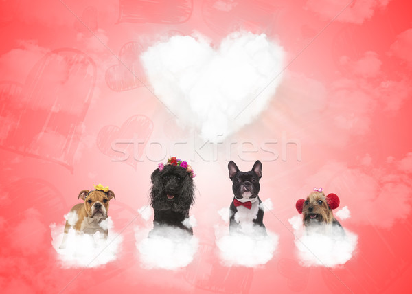 dogs on puffy clouds with big heart in the background Stock photo © feedough