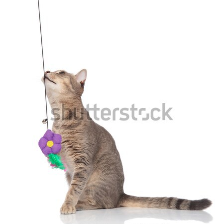 side view of cute metis cat standing on two legs Stock photo © feedough