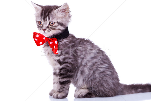 cat wearing red neck bow Stock photo © feedough
