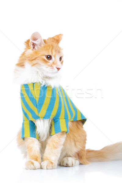 cute seated cat wearing clothes looks to side Stock photo © feedough