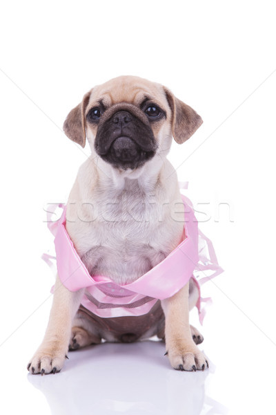 sad seated pug with pink dress looks up to side Stock photo © feedough