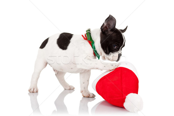 Stock photo: puppy playing with a santa hat