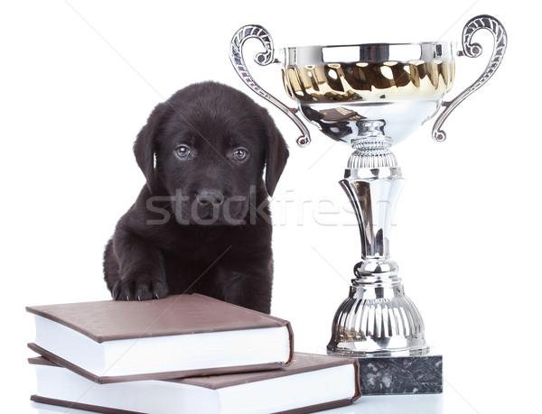 チャンピオン かわいい 黒 ラブラドル 子犬 ストックフォト © feedough