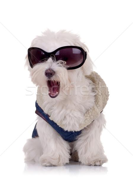 Foto stock: Quadro · roupa · óculos · de · sol · boca · aberta