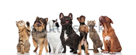 Grupo siete cute curioso mascotas Foto stock © feedough