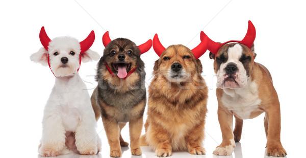 Aanbiddelijk groep honden kostuum halloween Stockfoto © feedough