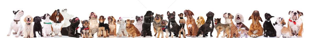 Muitos curioso cães diferente em pé Foto stock © feedough