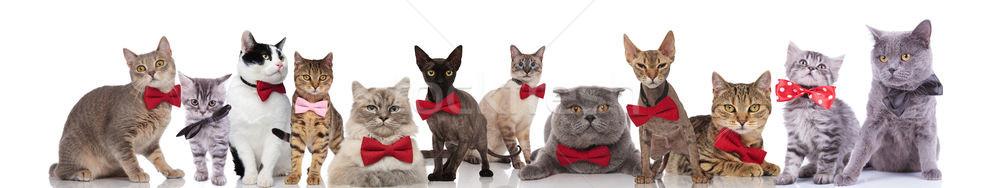 many adorable cats wearing elegant bowties on white background Stock photo © feedough
