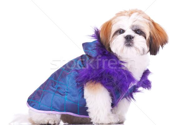 Puppy zoals souteneur zijaanzicht cute weinig Stockfoto © feedough