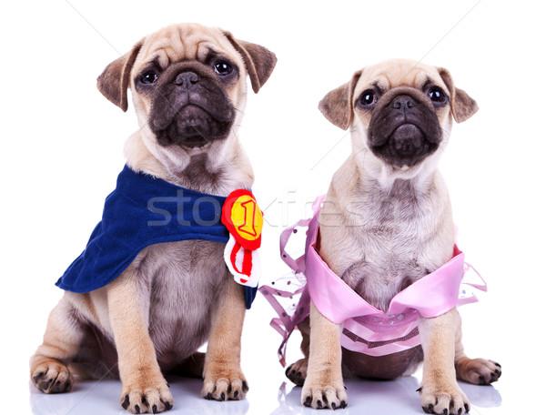Stockfoto: Nieuwsgierig · prinses · kampioen · puppy · honden · naar