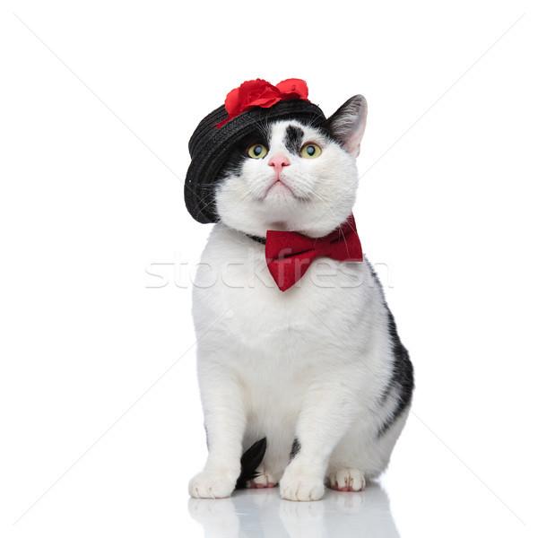 удивленный сидящий кошки сторона Сток-фото © feedough