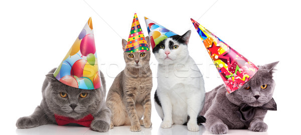 team of four party cats with colorful hats Stock photo © feedough