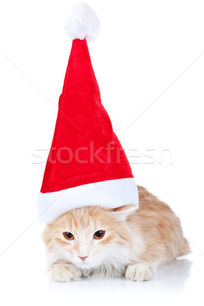 Stok fotoğraf: Kırmızı · beyaz · kedi · şapka