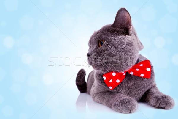 Foto stock: Grande · Inglés · gato · cuello · vista · lateral