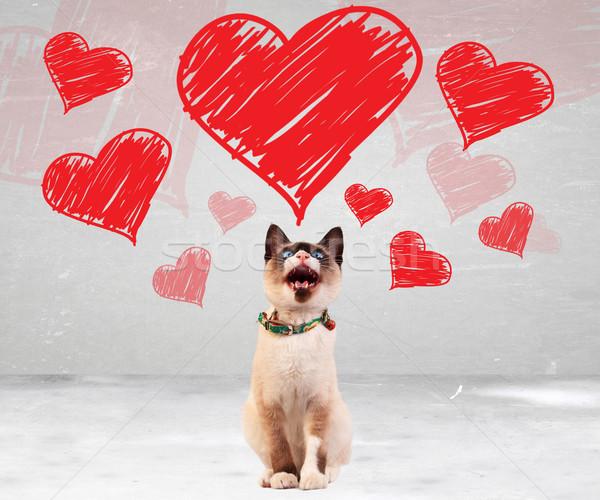 кошки сердцах красный котенка Сток-фото © feedough