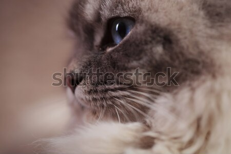 side of the head of a cat Stock photo © feedough