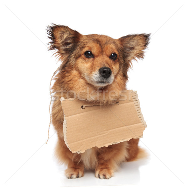 adorable brown dog wearing a carton sign Stock photo © feedough
