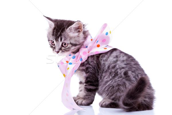 tabby cat wearing a pink ribbon Stock photo © feedough
