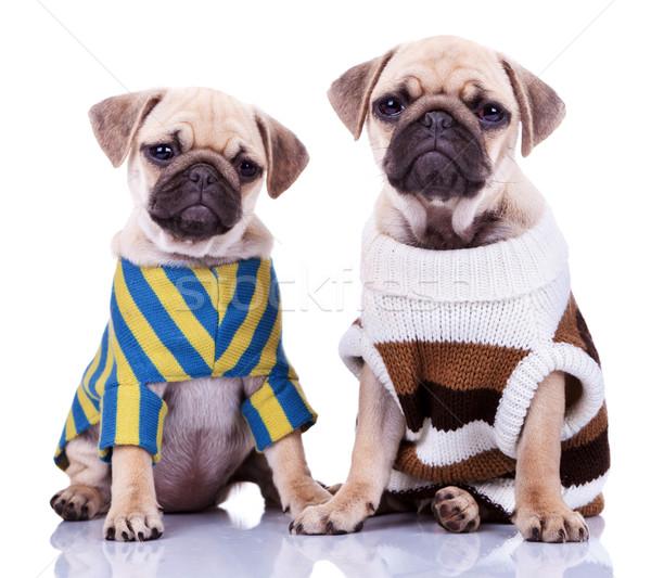 Stockfoto: Twee · puppy · honden · cute · vergadering · witte