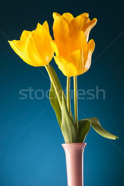 Photo stock: Fraîcheur · printemps · trois · jaune · tulipes · bleu