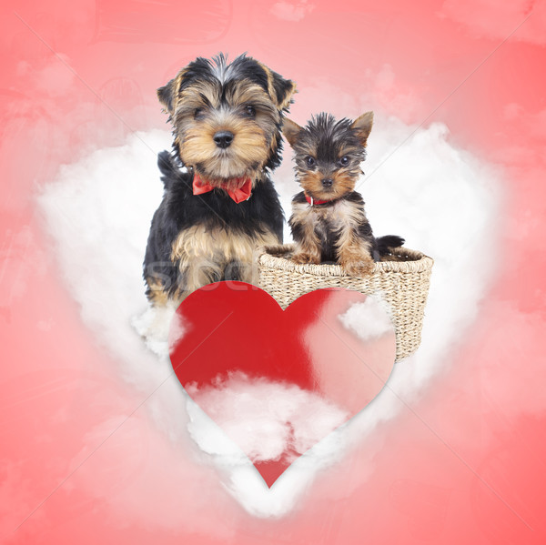 mother and cub yorkshire terrier share a love cloud Stock photo © feedough