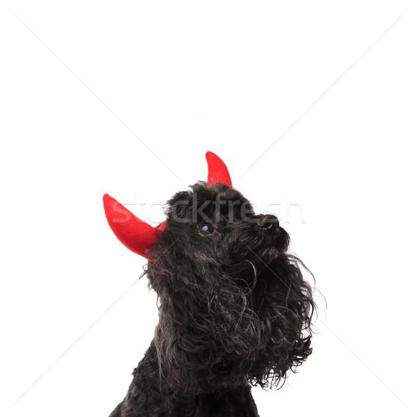 Stok fotoğraf: Meraklı · şeytan · kaniş · yukarı · bir · şey