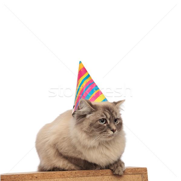 adorable birthday cat lying on wooden box waits its cake Stock photo © feedough