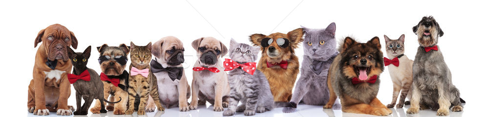 adorable team of stylish cats and dogs with bowties Stock photo © feedough