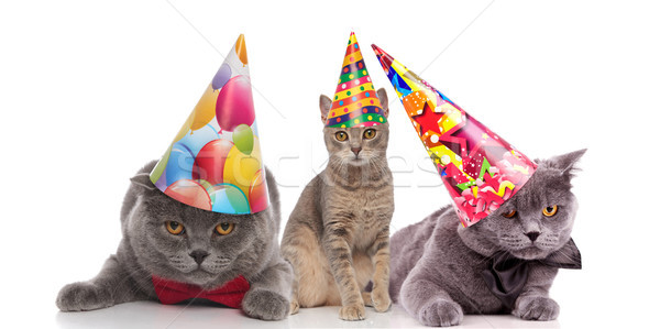 Drie grappig verjaardag katten kleurrijk naar Stockfoto © feedough