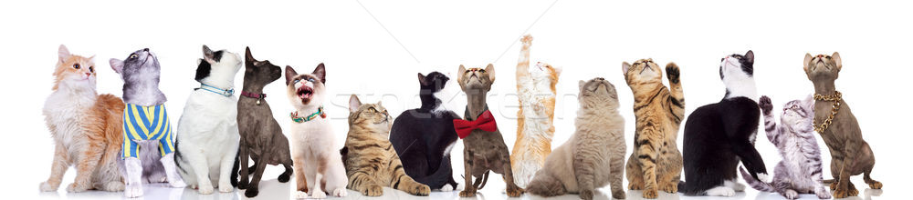 curious group of cute cats looking up  Stock photo © feedough