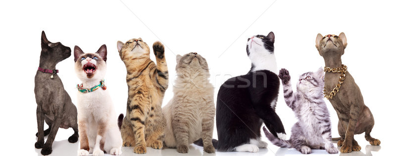 group of seven cute cats looking up  Stock photo © feedough