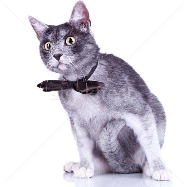 Curioso gato gris mirando algo Foto stock © feedough