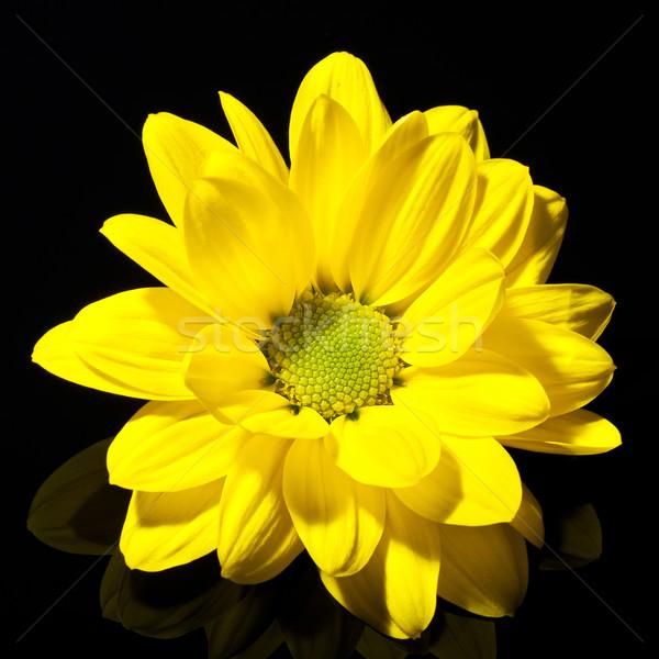 Geel dahlia bloem centrum zwarte voorjaar Stockfoto © feedough