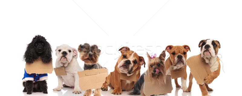 Büyük bir grup evsiz köpekler bekleme köpek sevmek Stok fotoğraf © feedough