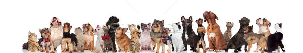 Сток-фото: кошек · собаки · Постоянный · сидят