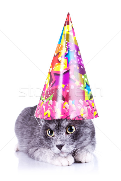 cute cat wearing a party hat Stock photo © feedough