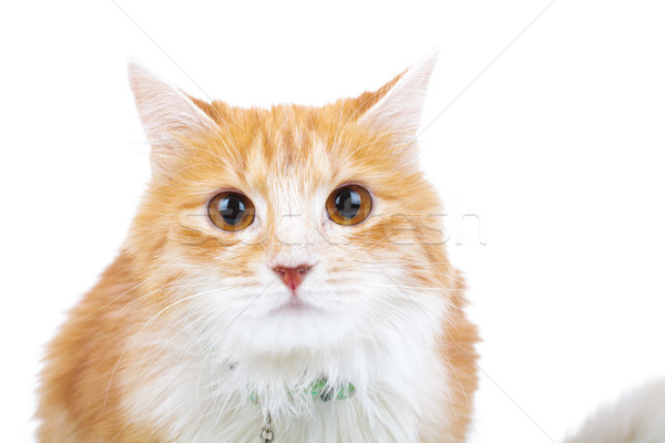 shocked red cat looks at the camera  Stock photo © feedough