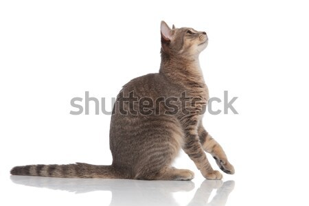 side view of cute curious cat looking up Stock photo © feedough