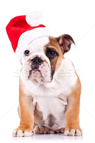 santa english bulldog puppy sitting  Stock photo © feedough