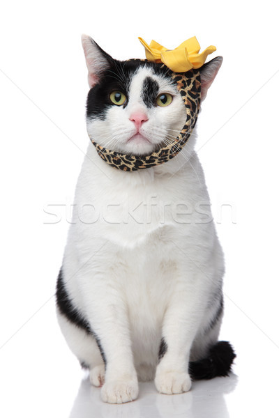 funny seated cat wearing leopard print headband Stock photo © feedough