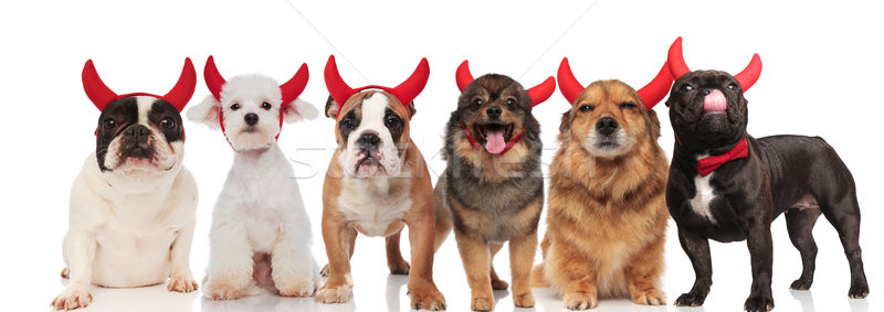 Grand groupe heureux diable chiens permanent séance Photo stock © feedough