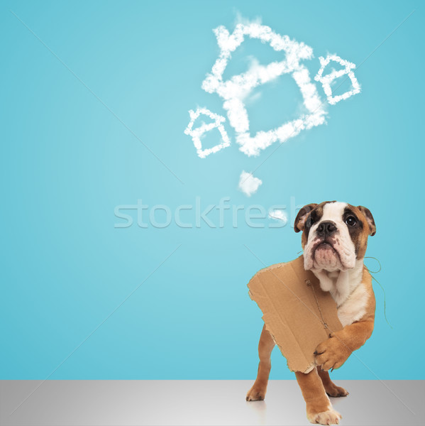 english bulldog holding sign and dreams of a new home  Stock photo © feedough